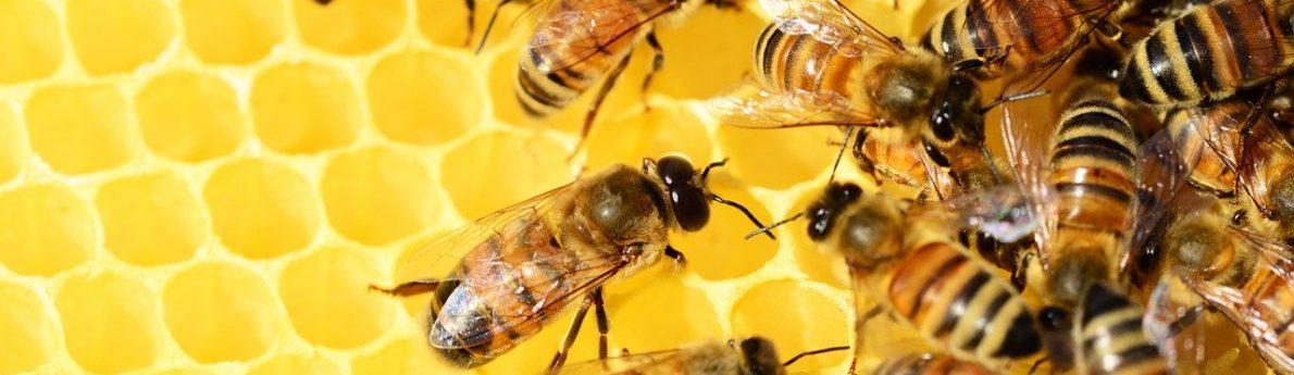 Avis aux détenteurs de ruches