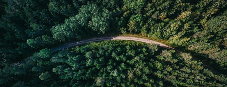 Forêt – © photographe